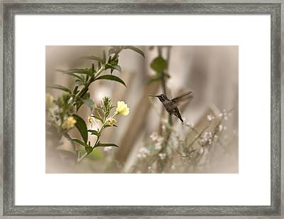 Breakfast Is Served Framed Print by Bonnie Bruno