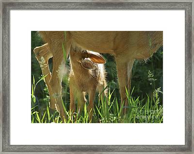 Breakfast Time 2 Framed Print by Sharon Talson