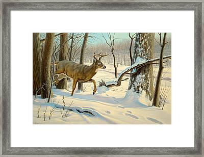 Breaking Cover-whitetail Framed Print by Paul Krapf