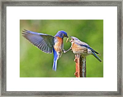 Breast Feeding. Framed Print by Jean Noren