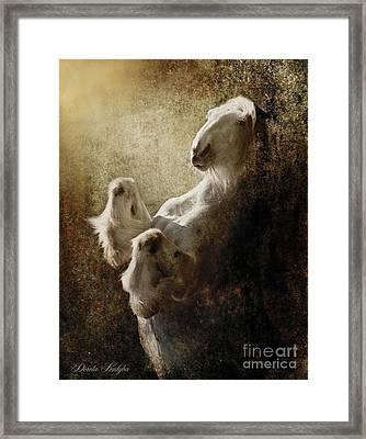 Breathless Framed Print by Dorota Kudyba