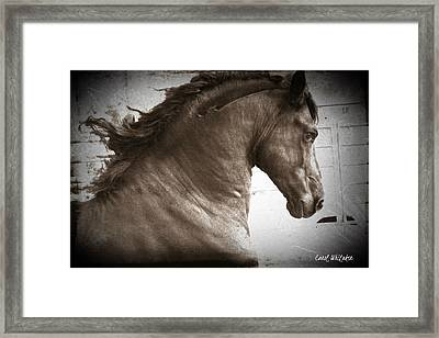 Breathless Framed Print by Royal Grove Fine Art