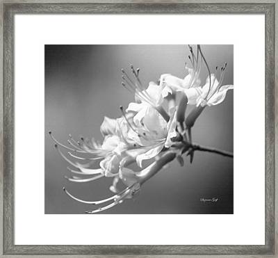 Breathtaking In Black And White Framed Print by Suzanne Gaff