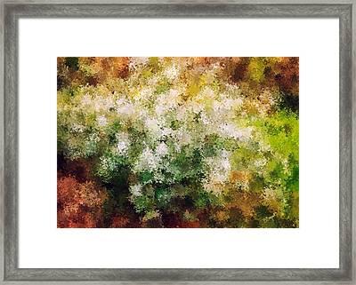 Bridal's Wreath Framed Print by Brenda Bryant