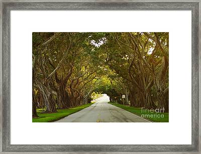 Bridge Road Banyans Framed Print by Lynda Dawson-Youngclaus