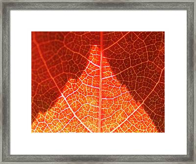 Bright And Dark Framed Print by Heiko Koehrer-Wagner