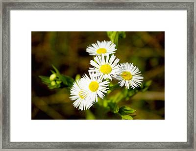 Bright And Merry Framed Print by Sheryl Burns