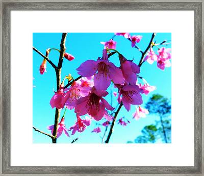 Bright Blossoms Framed Print by Carla Parris