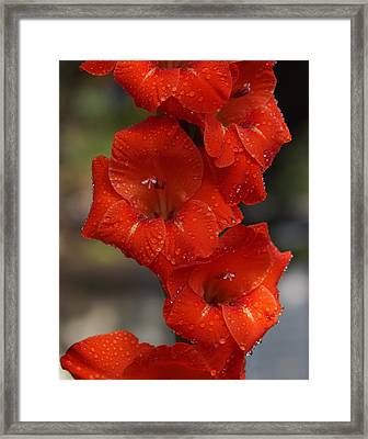 Bright Glad Framed Print by Kim Pate