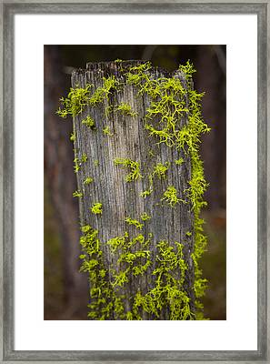 Bright Green Lace Framed Print by Omaste Witkowski