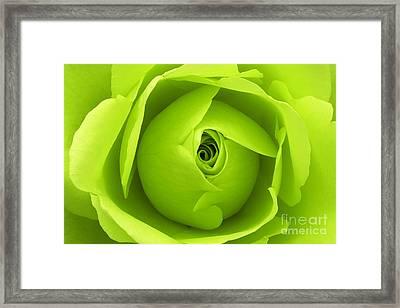 Bright Lime Green Rose Flower Framed Print by Natalie Kinnear