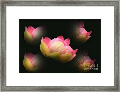 Bright Lotus Echoes Framed Print by Byron Varvarigos