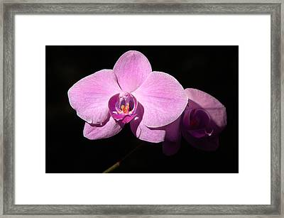 Bright Orchid Framed Print by Penny Lisowski