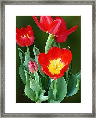 Bright Red Tulips Framed Print by Susan Savad