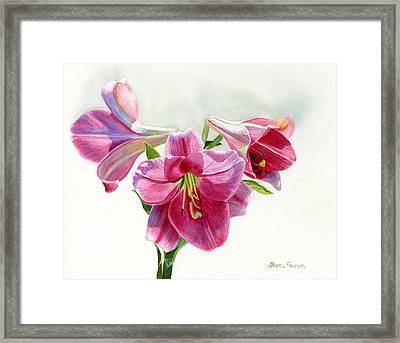 Bright Rose Colored Lilies Framed Print by Sharon Freeman