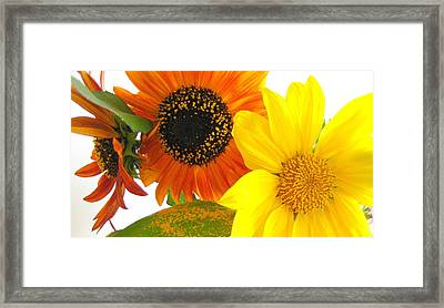 Bright Trio Framed Print by Kathy Bassett