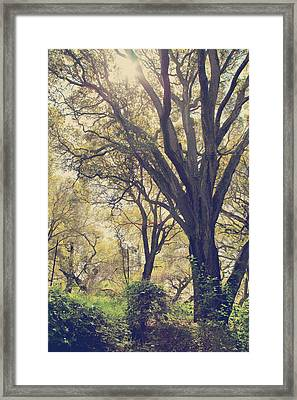 Brightening Up The Day Framed Print by Laurie Search