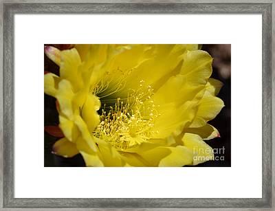 Brilliance Framed Print by Deb Halloran