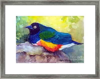 Brilliant Starling Framed Print by Asha Sudhaker Shenoy