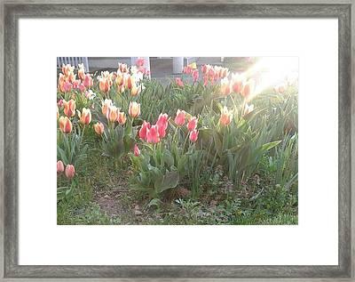 Brilliant Vibrance Of Spring Framed Print by Annette Abbott
