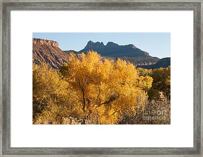 Brilliant Yellow Fall Colors Along The Virgin River Utah Framed Print by Robert Ford
