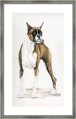 Brindle Boxer Framed Print by Charlotte Yealey