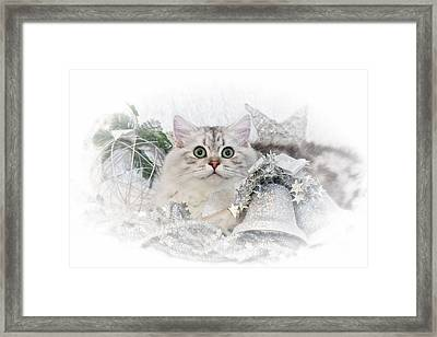 British Longhair Cat Christmas Time II Framed Print by Melanie Viola