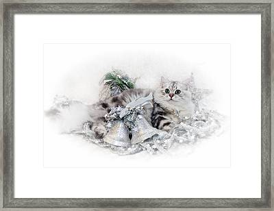 British Longhair Cat Christmas Time Framed Print by Melanie Viola
