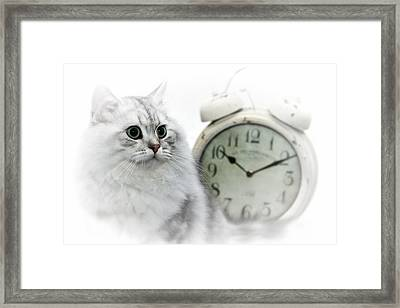British Longhair Cat Time Goes By II Framed Print by Melanie Viola