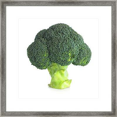 Broccoli Framed Print by Science Photo Library