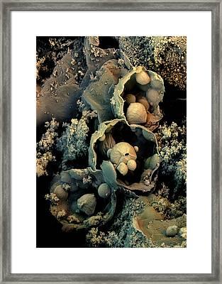 Broccoli Framed Print by Stefan Diller