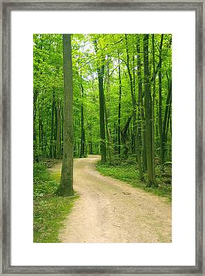 Broken Path Framed Print by Melissa Newcomb