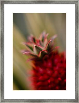 Bromeliad Crown Framed Print by Mike Reid