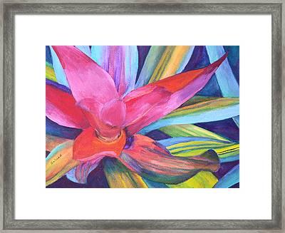 Bromeliad Pink Framed Print by Margaret Saheed