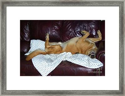 Bronson And His Ball Framed Print by Mary Deal