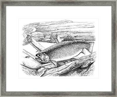 Brook Trout And Fly Framed Print by Jon Q Wright