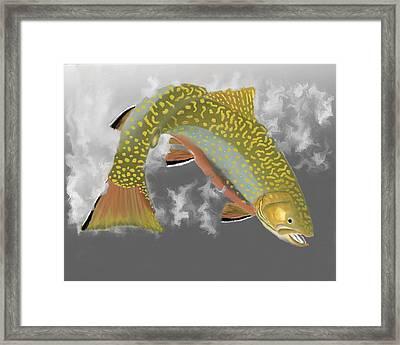 Brookie Framed Print by Bruce J Barker
