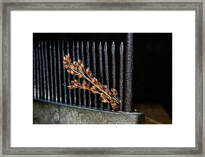 Broomcorn And Broomcomb Framed Print by Wilma  Birdwell