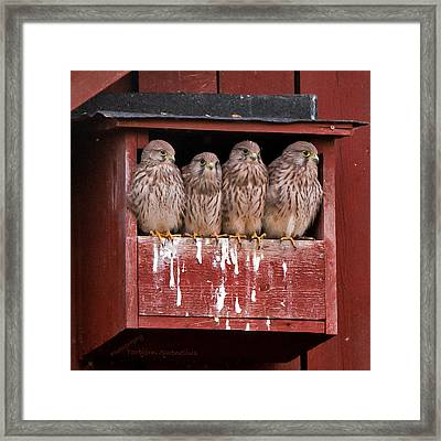 Brothers And Sisters Framed Print by Torbjorn Swenelius