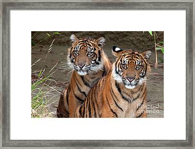 Brothers Framed Print by Dan Holm