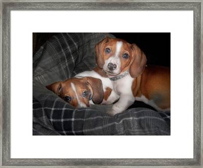 Brothers Framed Print by David and Carol Kelly