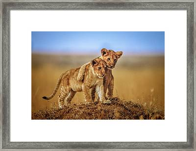 Brothers For Life Framed Print by Jeffrey C. Sink