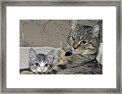 Brothers Framed Print by Susan Leggett