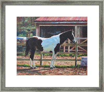 Brown And White Horse By Stable Framed Print by Martin Davey