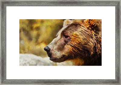 Brown Bear Painting Framed Print by Dan Sproul
