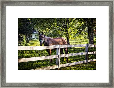 Brown Beauty Framed Print by Debra and Dave Vanderlaan