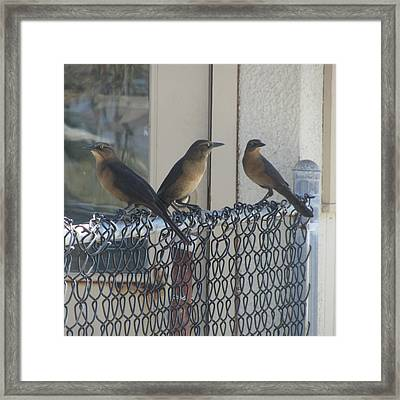 Brown Birds At Fernandina Beach Framed Print by Cathy Lindsey