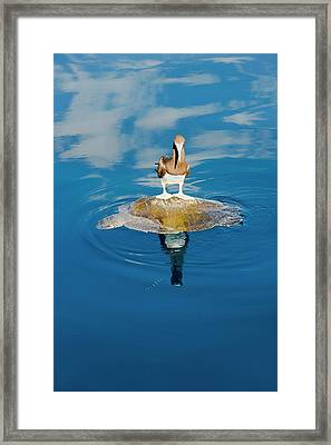 Brown Booby And Marine Turtle Framed Print by Christopher Swann