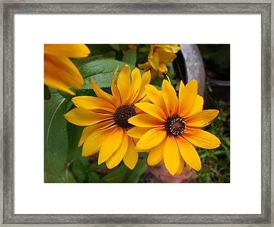 Bed Framed Print featuring the photograph Brown Eyes by Eloise Schneider