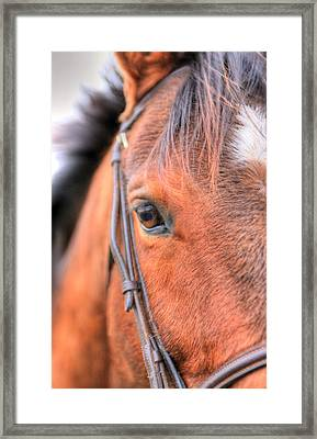 Brown Eyes Framed Print by JC Findley